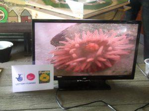 Beadlet anemone (1)