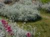 Flowerwalk16 (9)