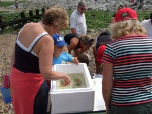 Rock Pooling 2014 specimens on view