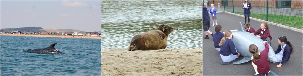 Sea mammal montage
